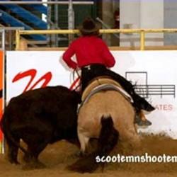 cowhorsetrainingr