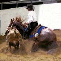 cowhorsetrainings